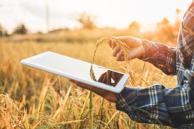 Agricultura inteligente. tecnología agrícola y agricultura orgánica. mujer utilizando la investigación.