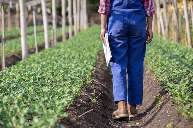 La agricultura investiga variedades de flores, conceptos agrícolas modernos.