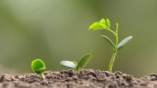 Agricultura siembra sembrar creciendo, negocio crecer concepto