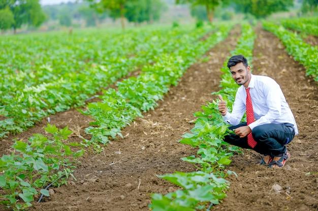 Agrónomo con agricultor en el campo de algodón