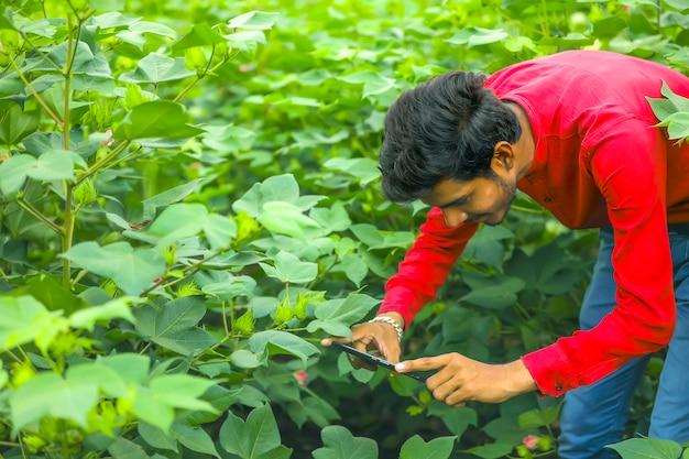 Agrónomo en el campo de algodón, capturando una foto de un campo de algodón en el móvil