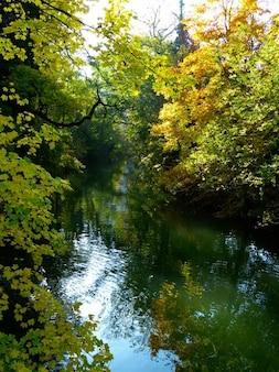 Agua banco danubio otoño árbol humor