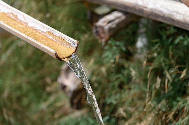 Agua en el bosque de bambú