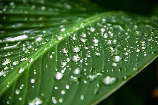 Agua de lluvia transparente sobre una hoja verde