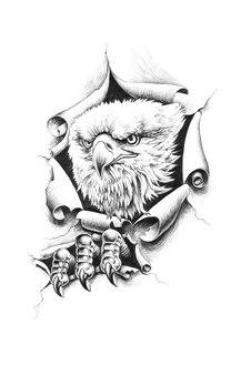 El águila calva rompe el papel
