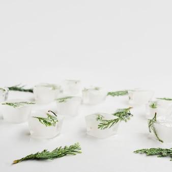 Agujas de coníferas en cubitos de hielo.
