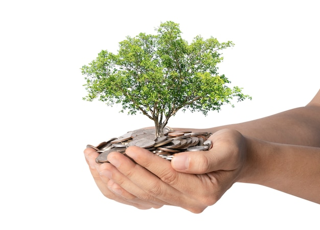 Aislado del crecimiento del árbol en dos manos sosteniendo el montón de monedas sobre fondo blanco, ahorro de dinero por concepto de inversión.