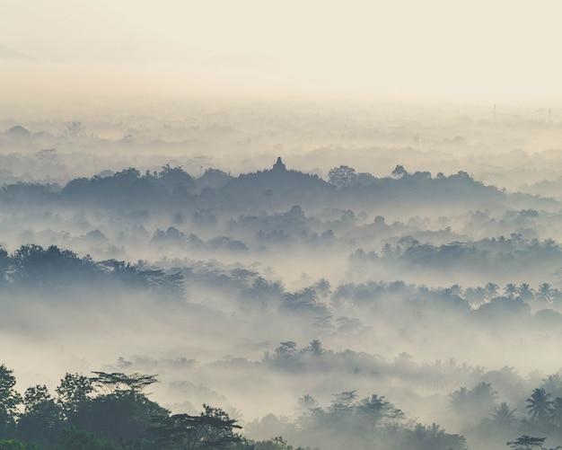 Ajardine el tiro de un bosque montañoso espeluznante cubierto en niebla espesa.