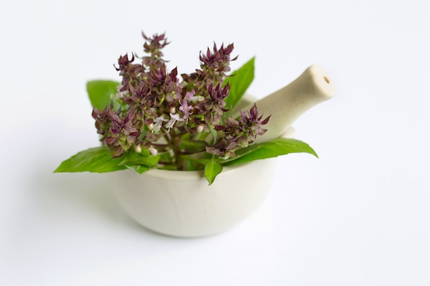 Albahaca dulce con flores de color púrpura en mortero de porcelana sobre blanco