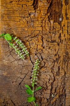 Albahaca holi sobre fondo de madera