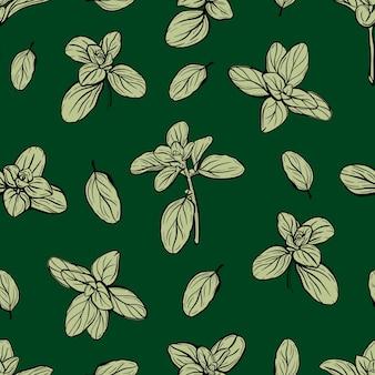 Albahaca patrón sin costuras hierbas italianas patrón de mejorana handdrawn ilustración