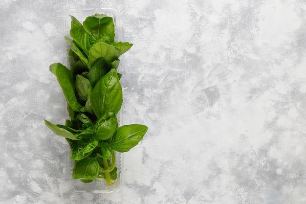 Albahaca verde fresca en cajas de plástico sobre hormigón gris