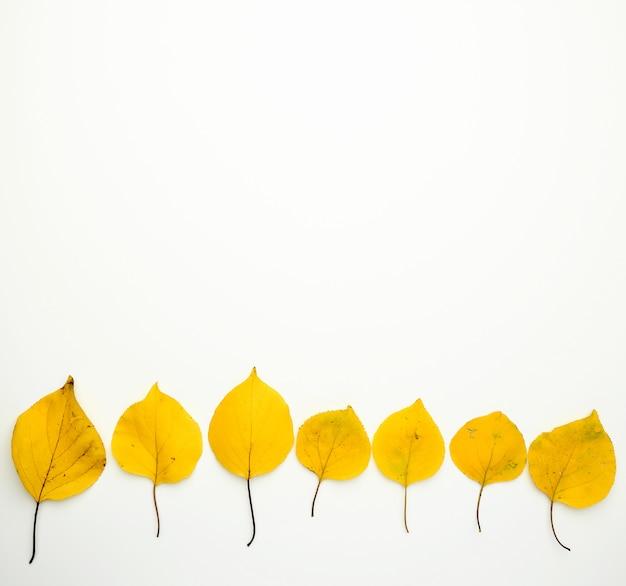 Albaricoque seco amarillo deja sobre fondo blanco