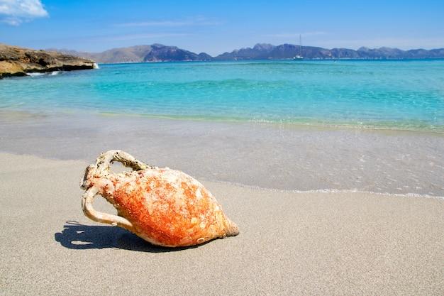 Alcudia playa mallorquina con ánfora romana