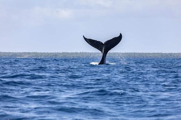 Aleta de cola de ballena sobre la superficie del océano