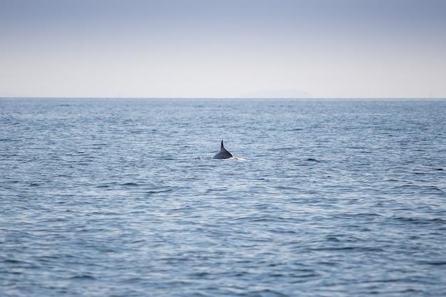 Aleta de delfines en el océano