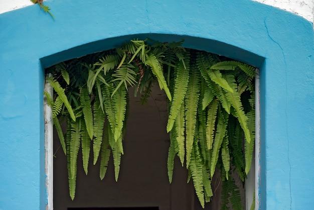 Alféizar de la antigua puerta de entrada con helechos