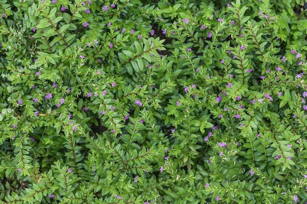 Alfombra de plantas con flores naturales, hierba con pequeñas hojas.