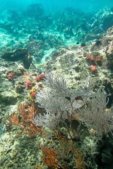 Algas coralinas y corel en la isla cockburn, myanmar