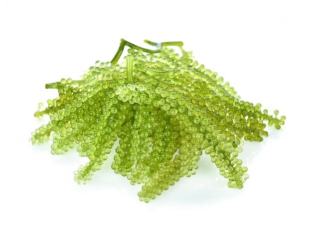 Algas marinas (caviar verde) algas aisladas sobre fondo blanco