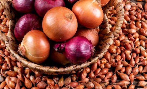 Algunas cebollas con cebollas rojas en una cesta, chalotes