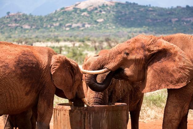 Algunos elefantes beben agua de un tanque de agua.