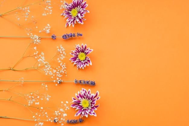 Aliento del bebé común; flor de crisantemo y lavanda sobre un fondo naranja
