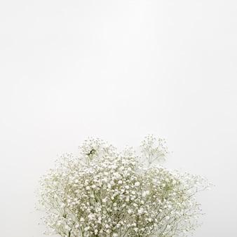 Aliento del bebe flores blancas sobre superficie blanca.