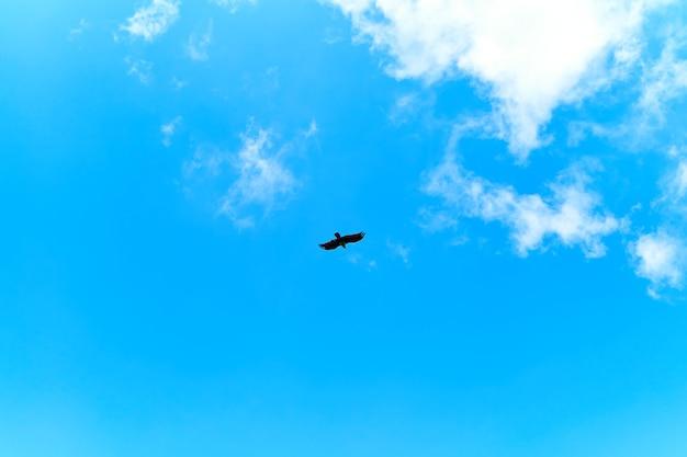 Alimentando águilas. bandada de águilas dando vueltas en el cielo esperando comida.