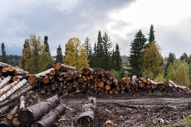 Almacén de árboles talados en primer plano y árboles vivos
