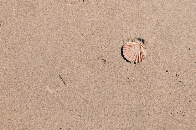 Almeja en la arena del mar