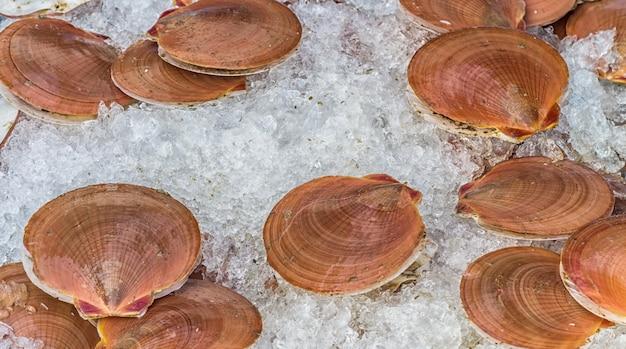 Almejas frescas sobre el hielo.