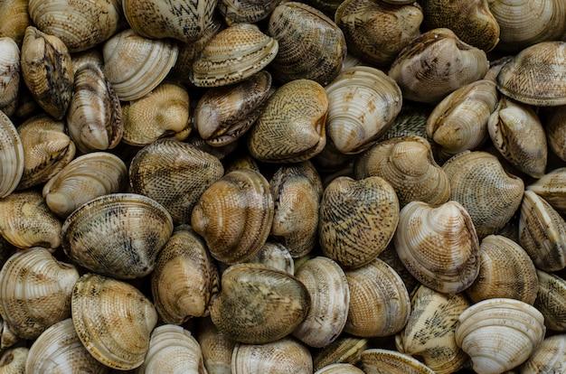 Almejas, mariscos o moluscos. vista superior
