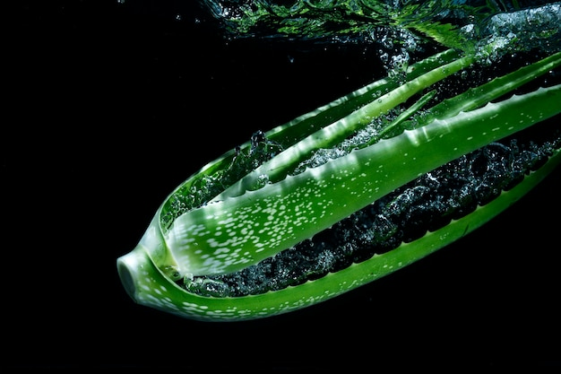 Aloe vera chapoteando en salpicaduras de agua clara