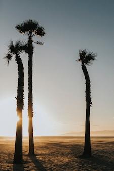 Altas palmeras en la playa