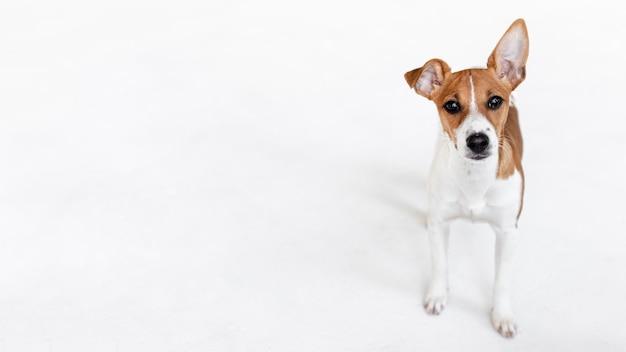 Alto ángulo de adorable perro con espacio de copia