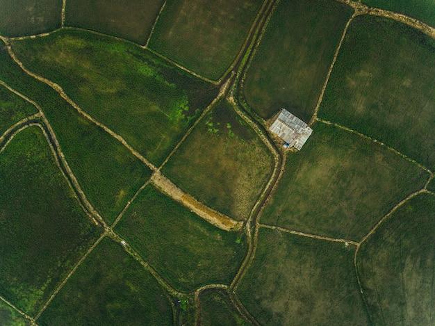 Alto ángulo del área de siembra de arroz en tailandia rural