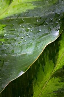 Alto ángulo de macro gotas de agua en la hoja