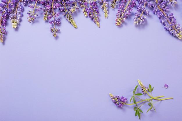 Altramuces sobre papel violeta