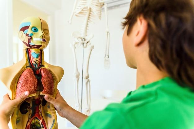 Alumnos de anatomía y biología humana con un modelo artificial del cuerpo humano con órganos.
