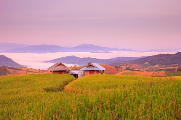 Amanecer en el campo de arroz en terrazas en mae-jam village, provincia de chiang mai, tailandia