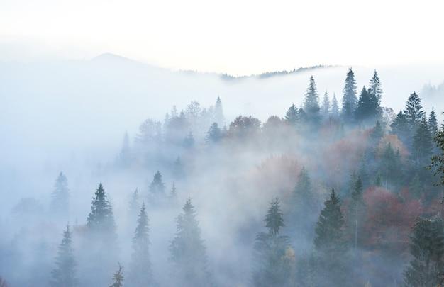 Amanecer de hadas en el paisaje del bosque de montaña por la mañana.