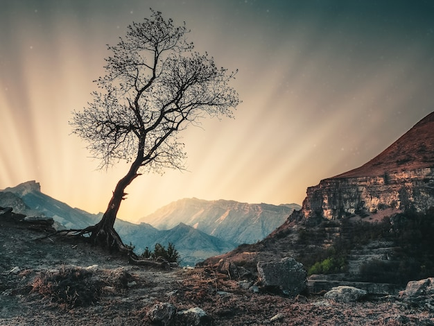 Amanecer mágico en las montañas. la silueta de un árbol solitario en el contexto de la puesta de sol.