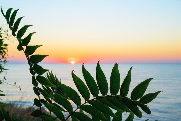 Amanecer en el mar negro a través de las hojas. crimea