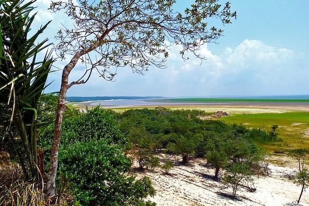 Amazon rainforest agua flora de los bosques tropicales