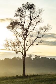 Ambiente matutino en praderas y bosques llenos de niebla y cálido sol.