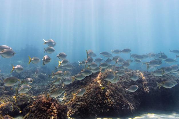 Ambiente submarino con peces.
