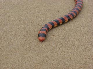 Amenaza de serpientes,