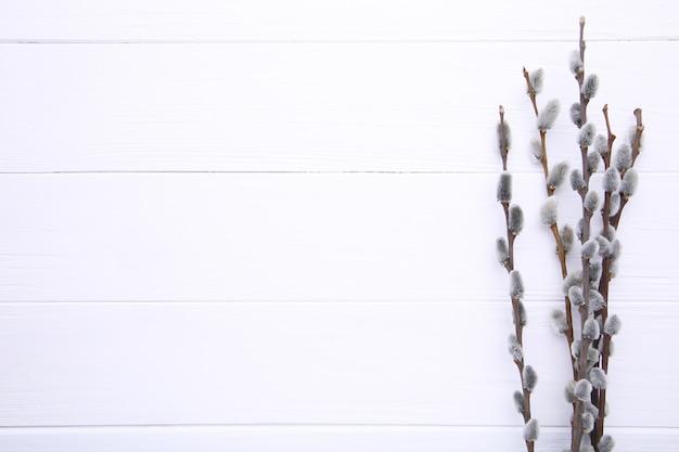 Amentos de sauce sobre un fondo blanco de madera con espacio de copia, pascua