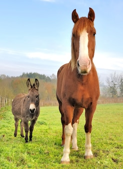 Amistad entre un burro y un caballo.